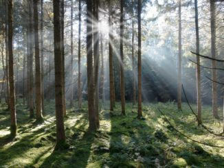las - promienie słońca pomiędzy drzewami