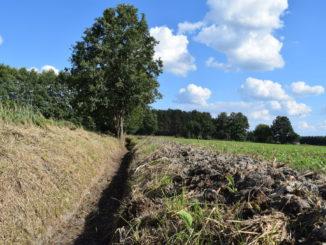 Zdjęcie oczyszczonego rowu melioracyjnego fot. Gmina Wiejska Nowa Sól